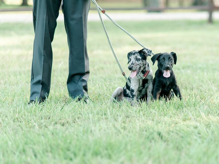 Groom holding puppies on leash