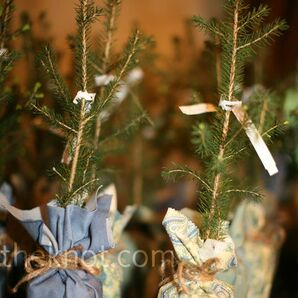 Sapling Wedding Favors