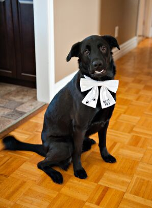 Black Lab With White Bow Tie