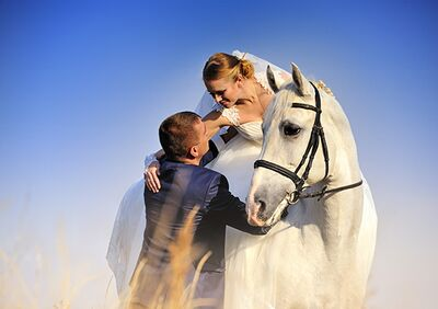 The World Equestrian Center