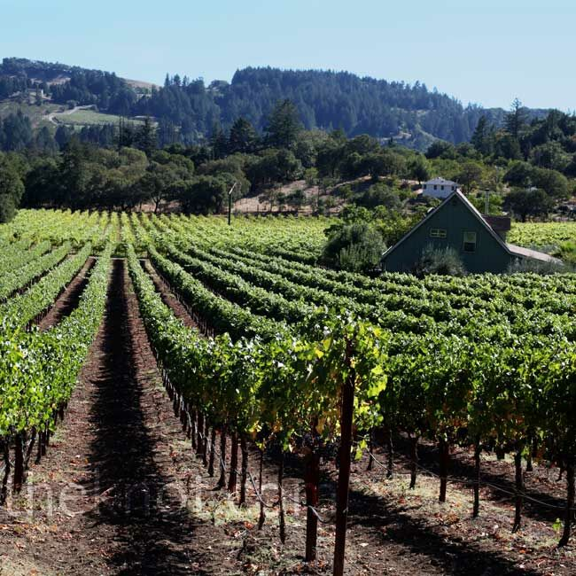 The couple chose Hans Fahden Vineyards for its gorgeous grounds.