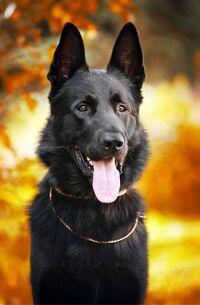 dogmom5