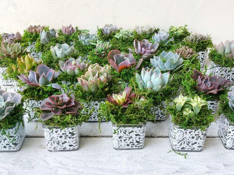 Succulent bridal shower favors