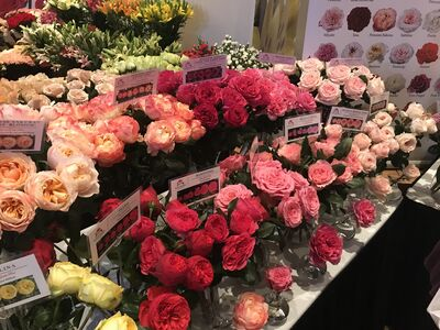 Springfield Wholesale Flowers