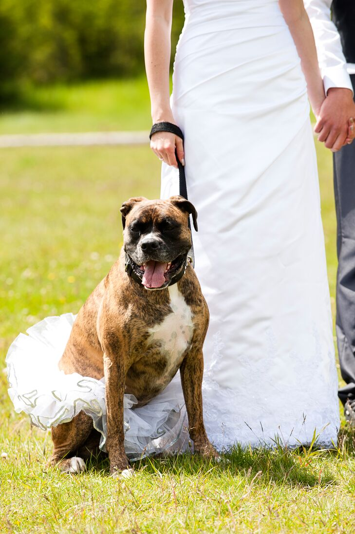 The couple's adorable pitbull was part of the wedding and looked lovely in a white tutu skirt.