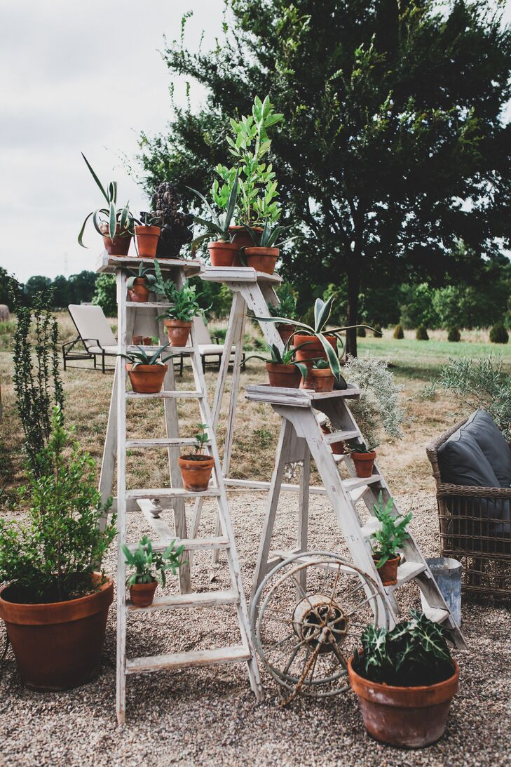 Potted Plants on a White Ladder