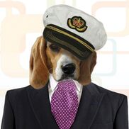 Baltimore, MD Beach Band | The Regal Beagles Yacht Rock Band