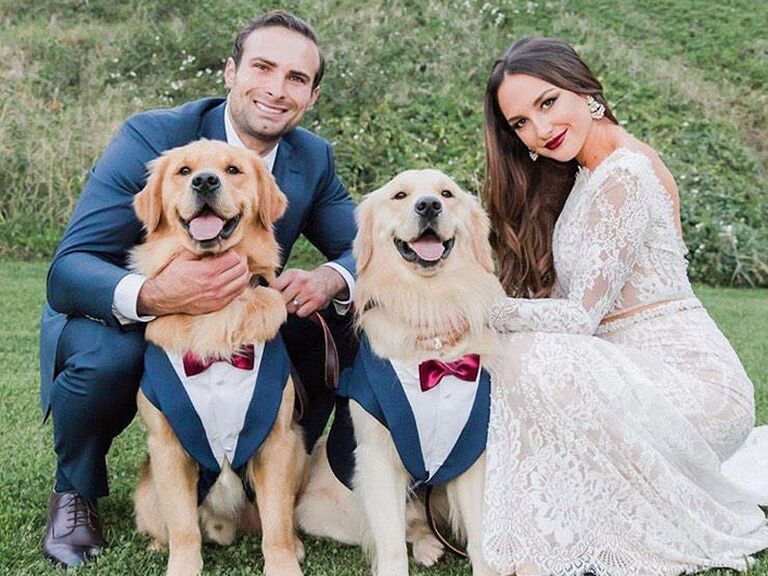 Two dogs in matching blue tuxedos at wedding