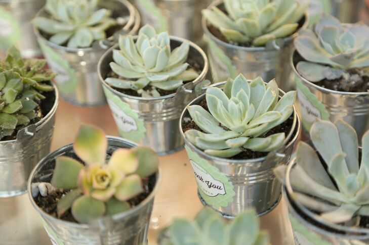 Potted green succulents were given out to guests as wedding favors, so that they could grow their own at home like the couple's love had grown for each other.