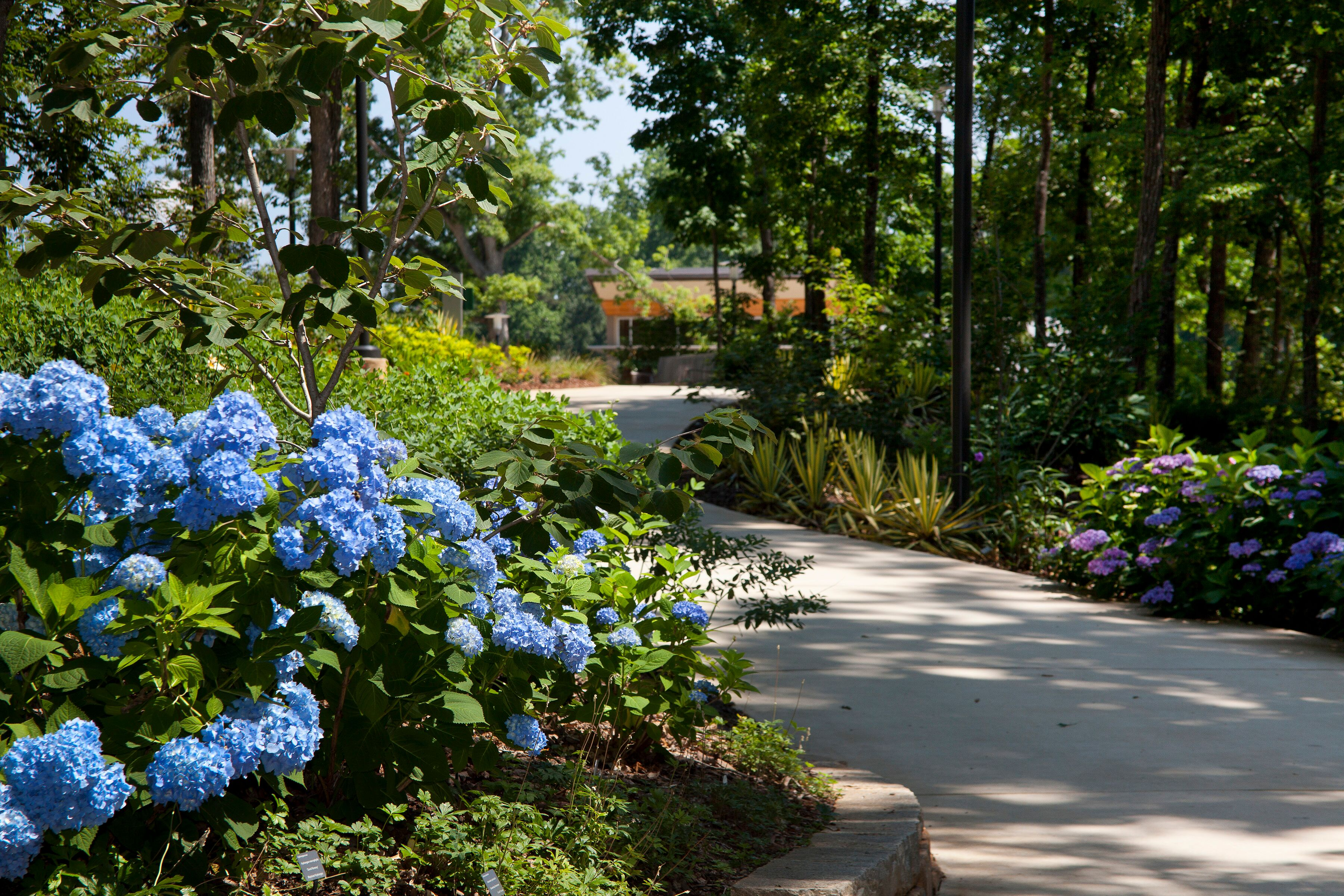 atlanta botanical garden gainesville gainesville ga - Gainesville Botanical Garden