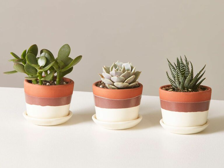 trio of potted succulents