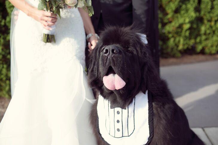 Black Fluffy Wedding Dog with Tuxedo Bib Collar