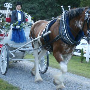 Virginia Beach, VA Convertible Rental | Smithfield Horse & Carriage, Ltd.