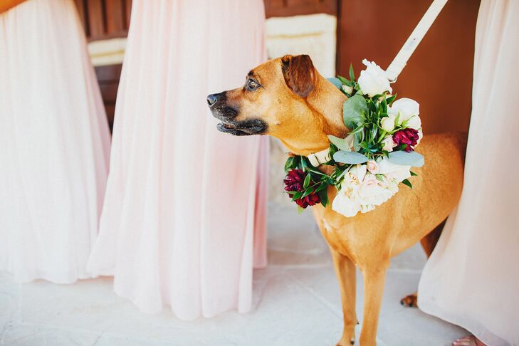 "Courtney and Andrew's dogs are everything to them, so there was no way they'd be left out of the wedding. ""I think our dogs help bring out our best selves, just as Andrew brings out mine and I bring out his,"" Courtney says. This adorable pup wore a floral collar that matched the bridesmaid bouquets—it had champagne and blush spray roses, maroon dahlias and greenery."