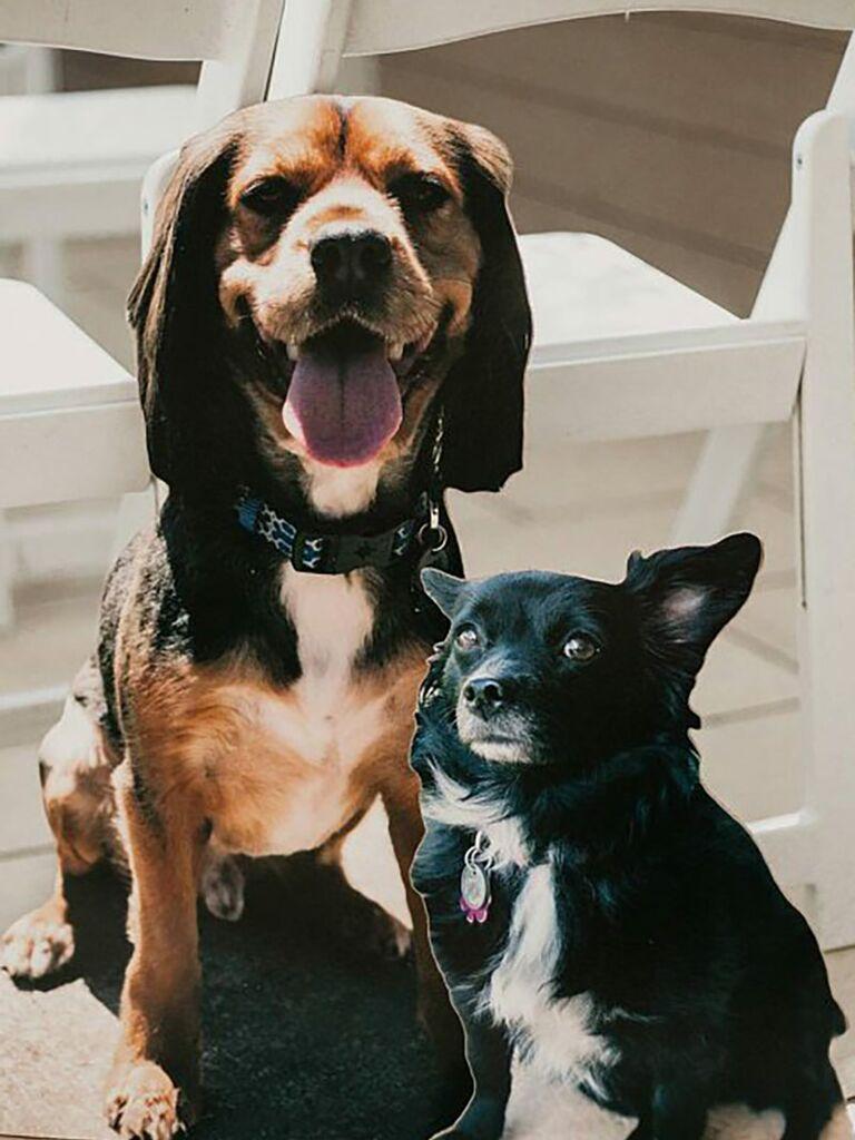 Wedding photo booth dog cutouts