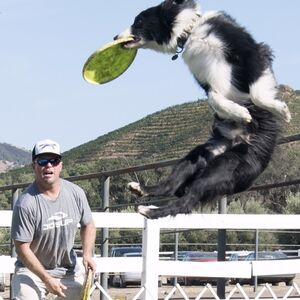 Bend, OR Animal For A Party | K9 Kings Flying Dog Show