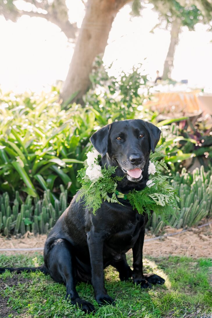 Dog with Greenery Wreath