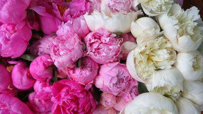 Petals & Blooms Flowers
