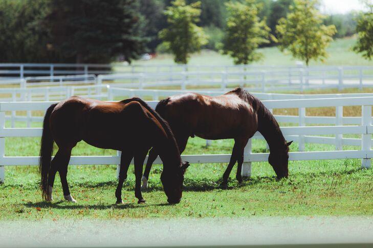 Wild Horses at Crooked Creek