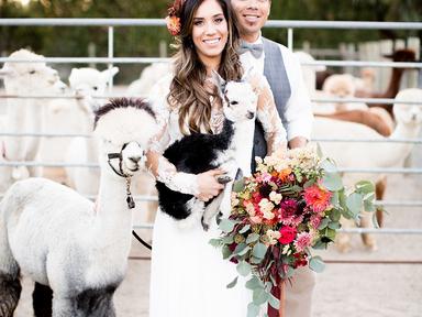 wedding alpaca farm rustic fall