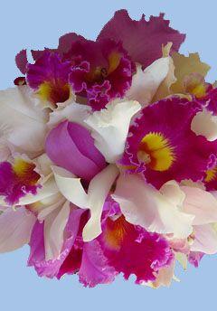 MartinRoberts Floral Design
