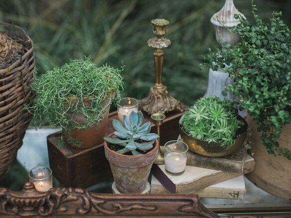Succulent decor