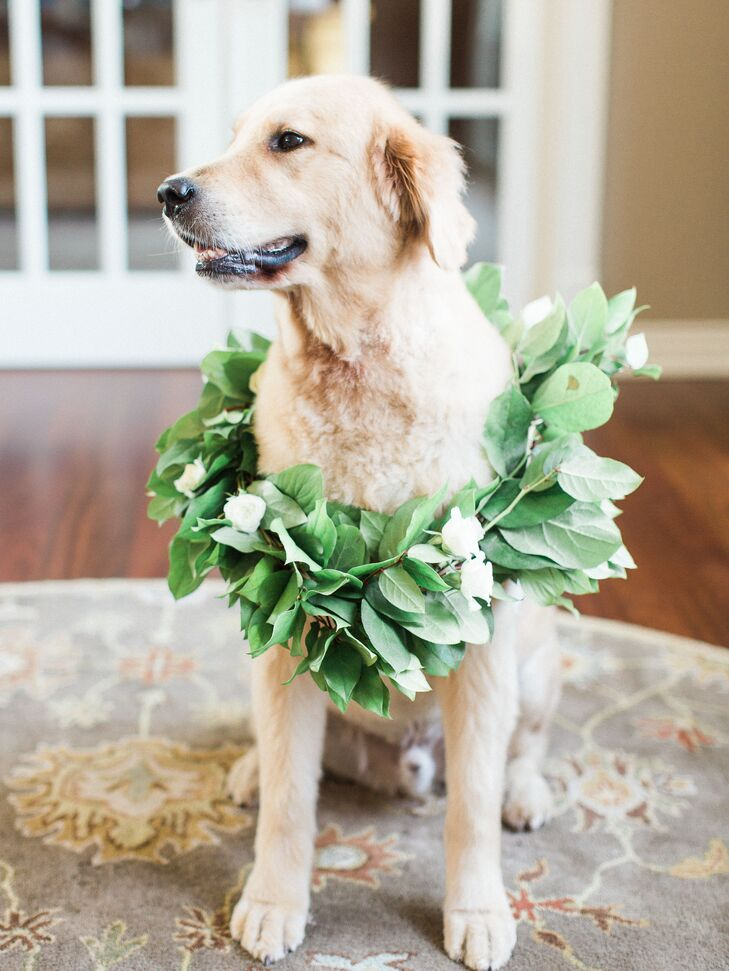 The couple's golden retriever, Bear, donned a green-leaf collar made from eucalyptus.