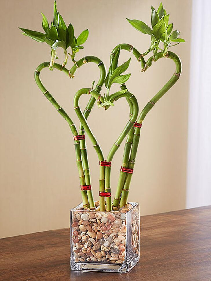 Naturally grown heart-shaped bamboo