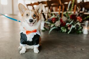 Corgi Ring Bearer for Wedding at Brick in San Diego, California
