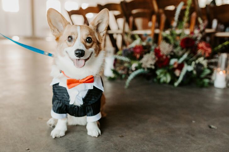 Corgi Ring Bearer for Wedding at Brick in San Diego, California
