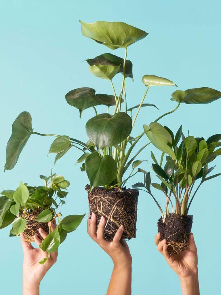 Plant subscription service