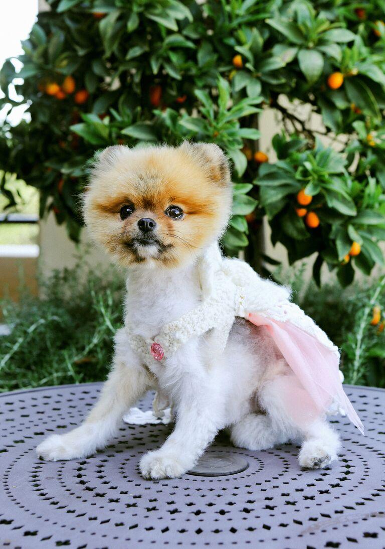 Wedding dog attendant