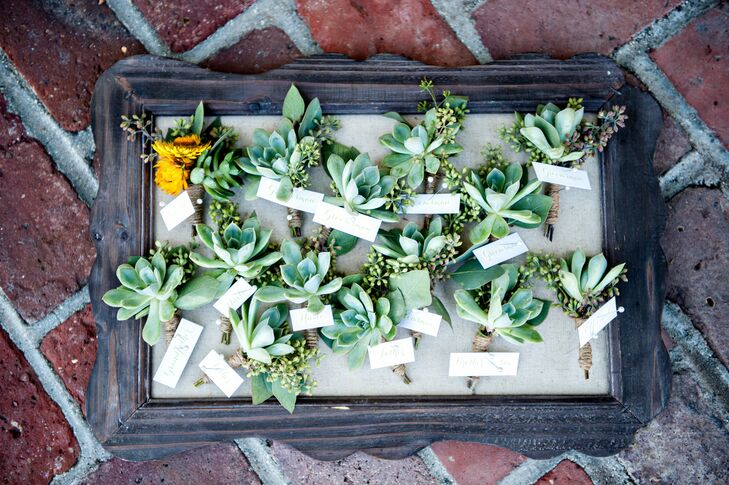 Succulent Decor