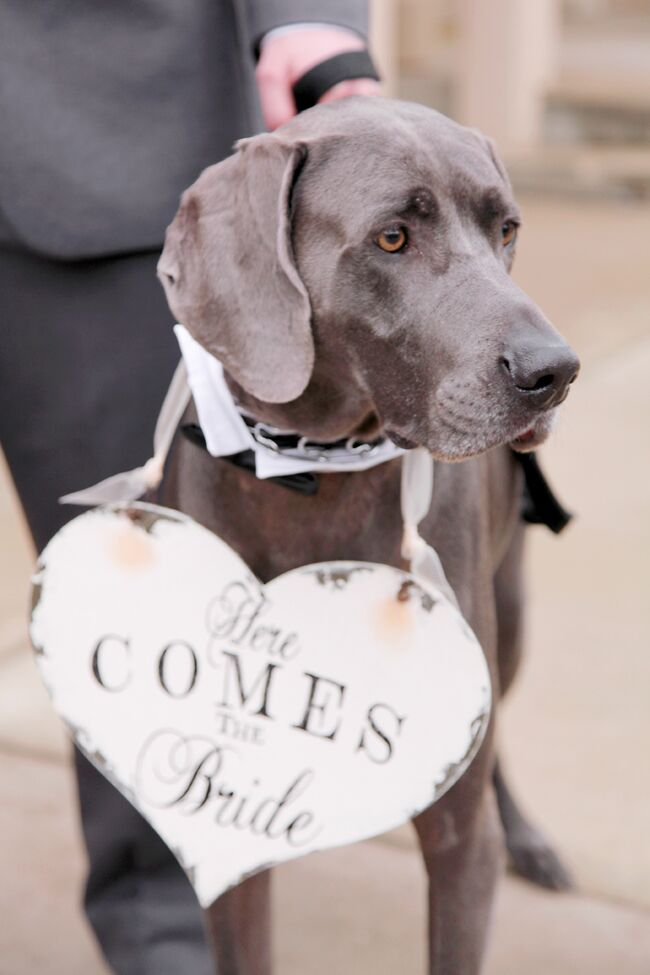 "The couple's dogs walked down the aisle with the ring bearer. This sweet pup wore a heart sign that read, ""Here comes the bride."""