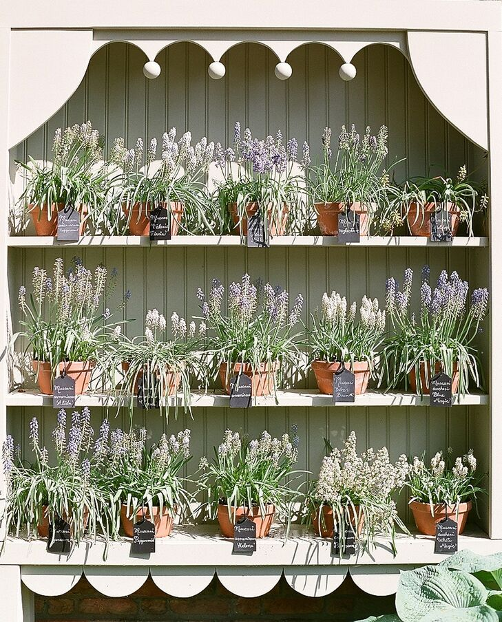 Rustic Lavender Plants in Terra Cotta Pots