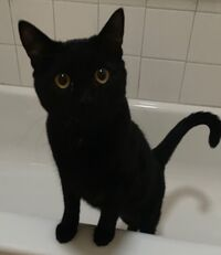 blackcat01