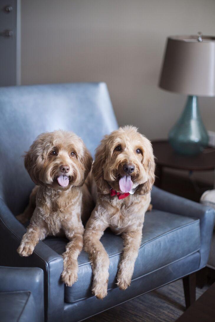 Puppy Ringbearers