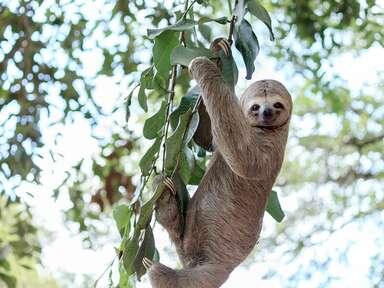 Sloth Sanctuary at Nayara Resorts in Costa Rica