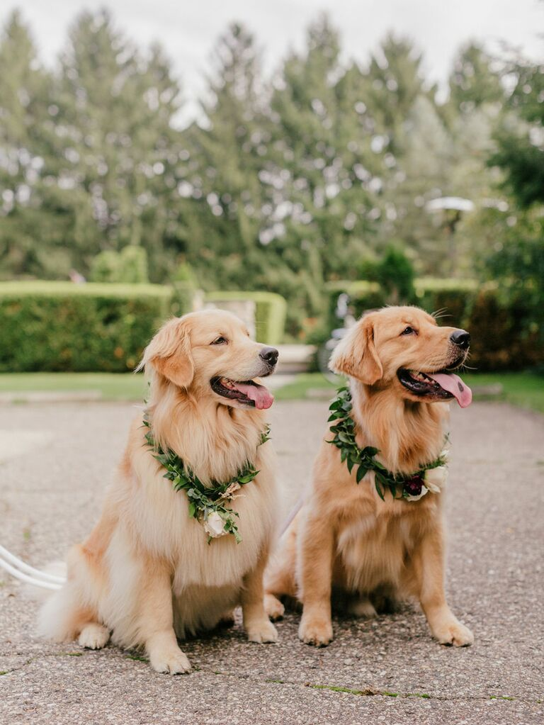 Dogs wearing green flower crown collars at wedding