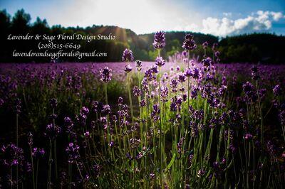 Lavender & Sage Floral Design Studio