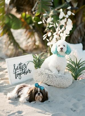 Dogs at Beach Wedding in San Diego