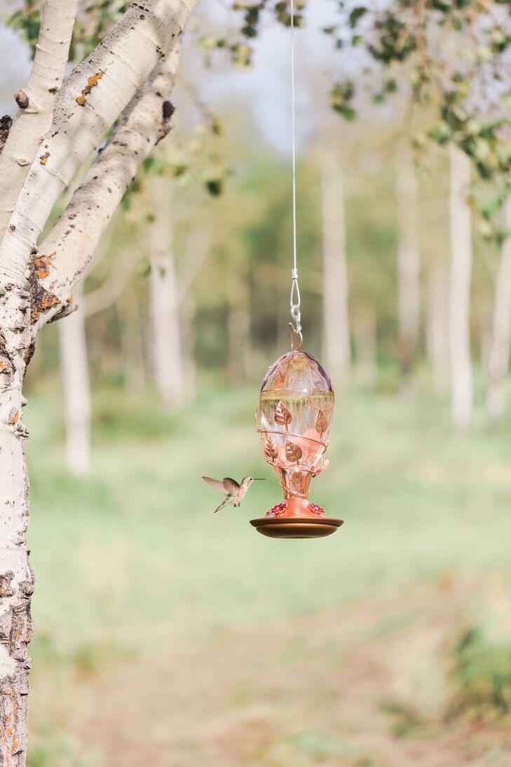 Pink Hummingbird Feeders
