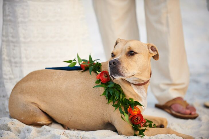 The couple's dog, Burton, was the ring bearer and he stole the show in a necklace made of roses and greenery.