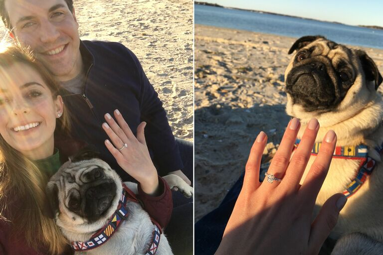 jabba pug engagement