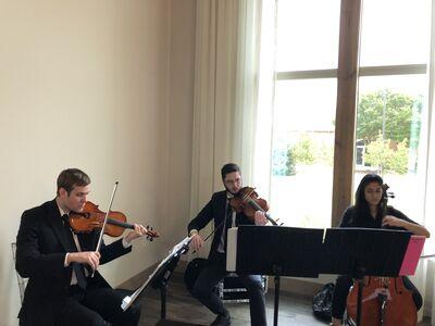 Serenata Strings
