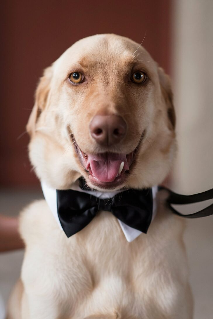 """""""Our yellow lab, Beaureagrd, was the ring bearer,"""" Kathleen says. """"Alan built a special box for him to sit on during the reception, and we trained for months to make sure he knew his wedding pose command. It was also his third birthday, so it was extra-special for us to have him be a part of the celebration."""""""