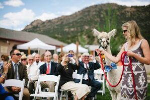 Bow Tie-Trimmed Alpaca Processional