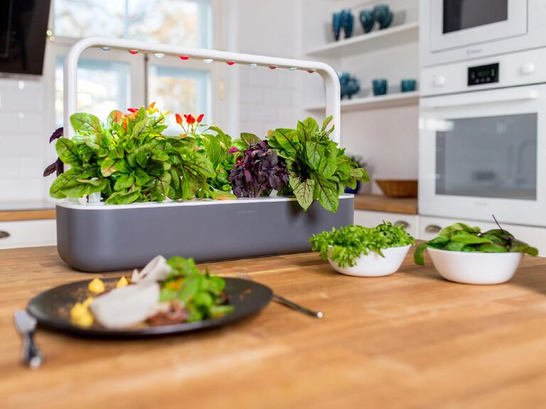 Gray and white smart garden in kitchen with thriving greens