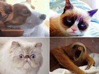 Morning of your wedding in Animal Gifs
