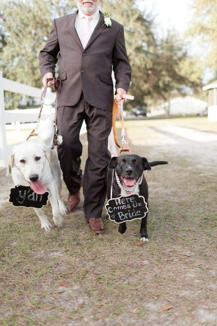 Dog Escorts